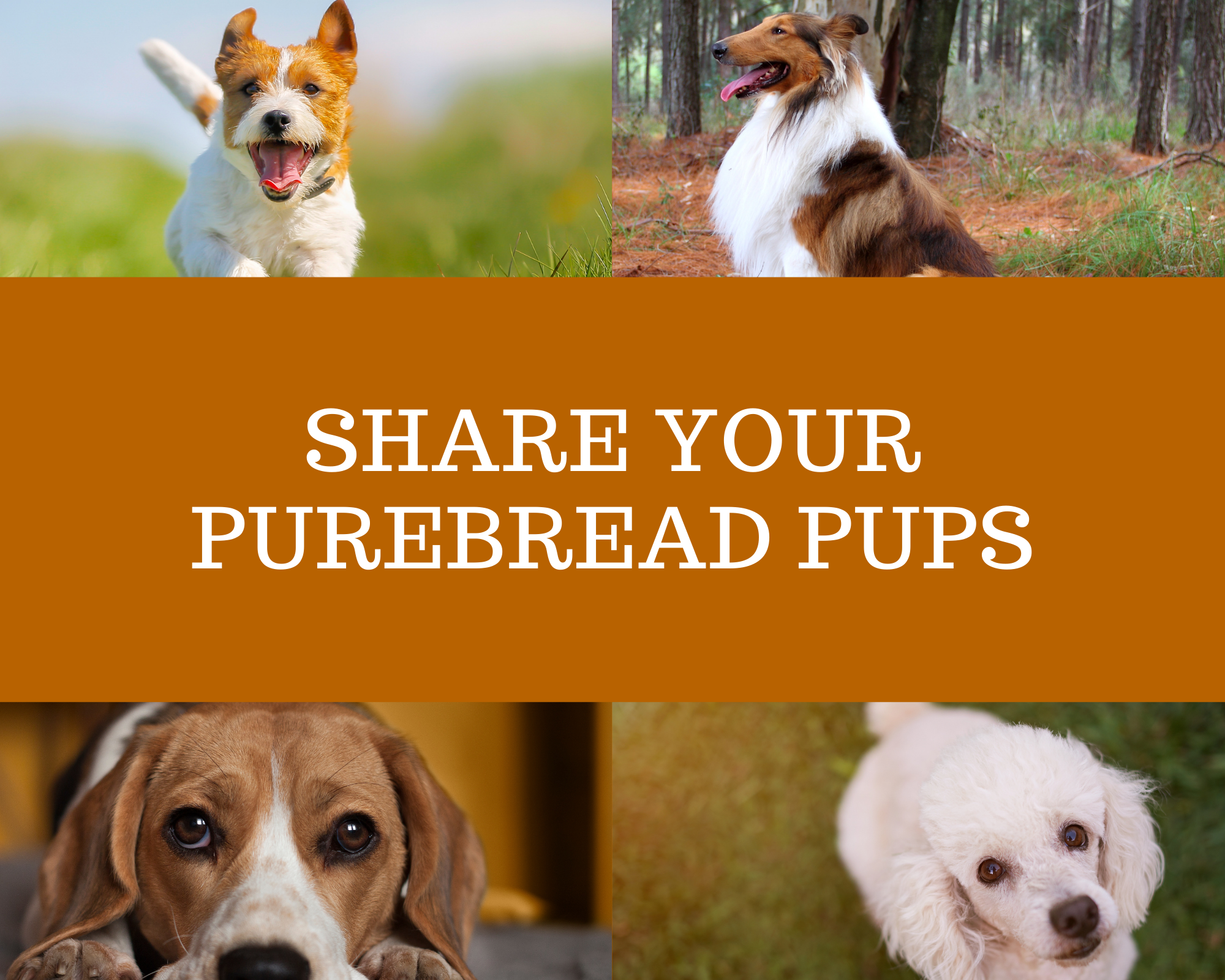Share Your PureBread Pups